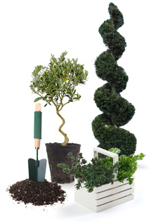 Φυτα εξωτερικου χωρου